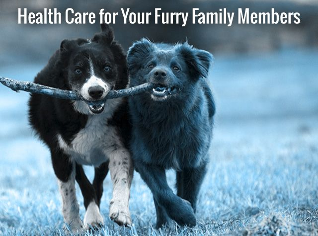 Health Care for Your Furry Family Members